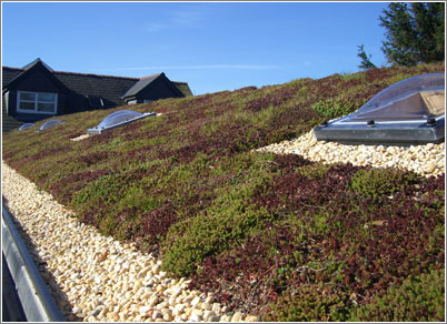 Sedum Roof Amp Alternatives To Sedum Sc 1 St Superhomes
